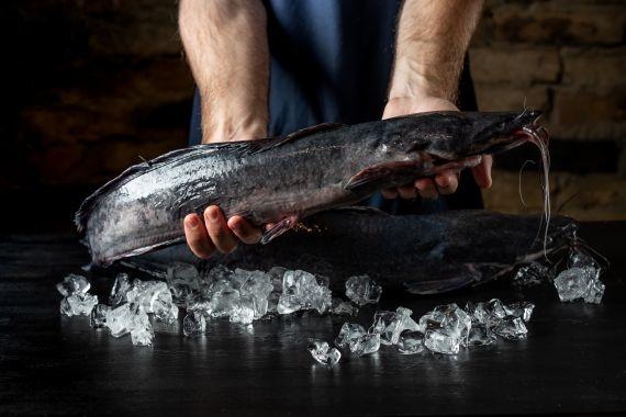 Рыба на AQUAFARM.com.ua