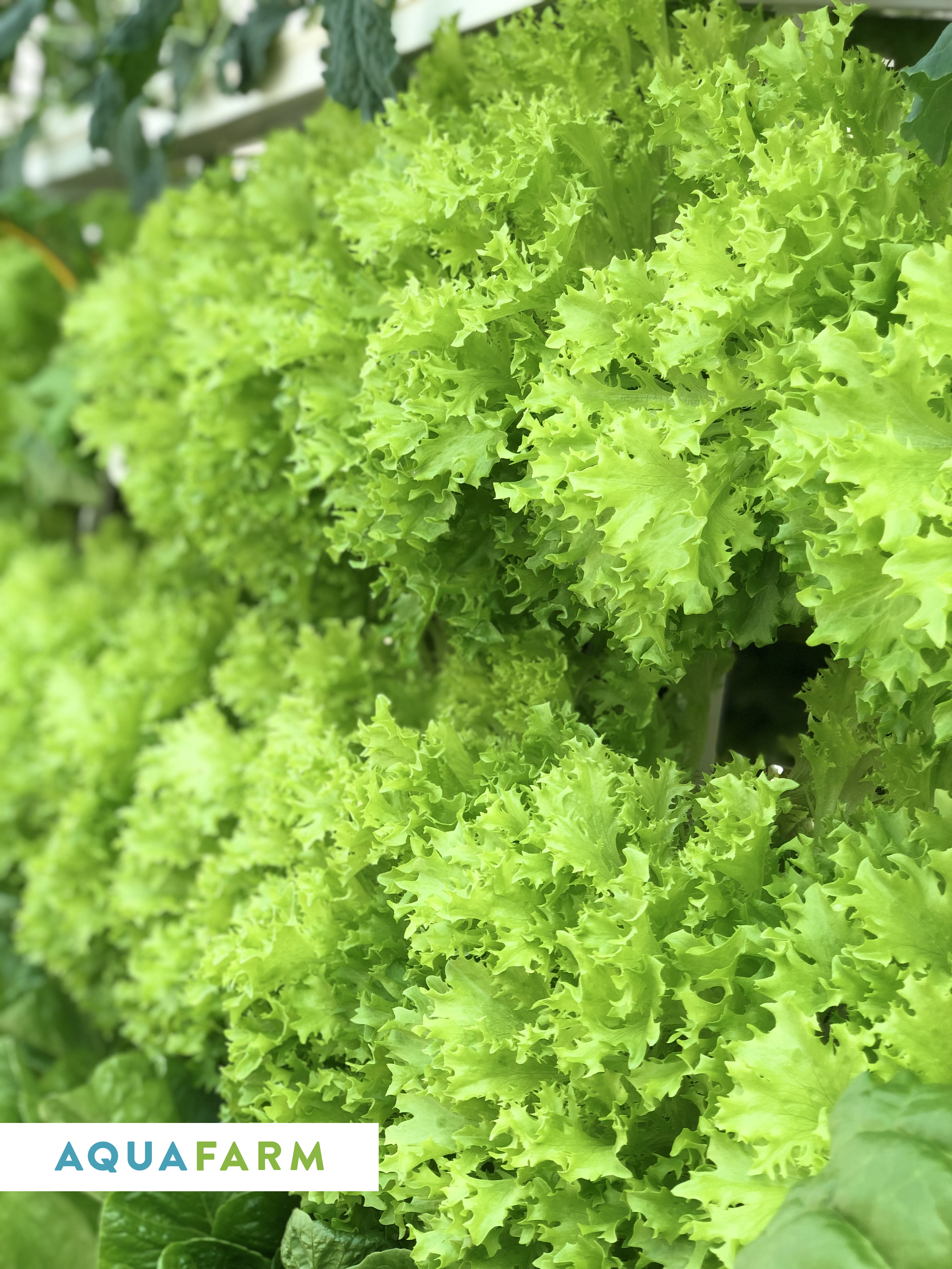 зелень